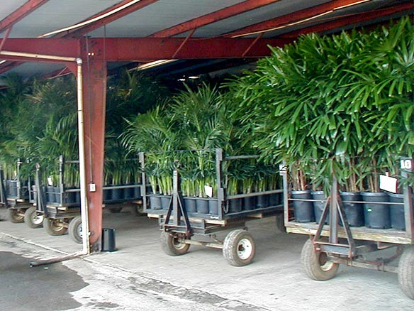 Kohala Nursery - Packing facility